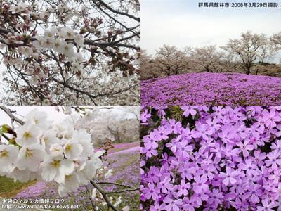 20080329tatebayashi_3
