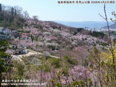 20080406hanamiyama_s1