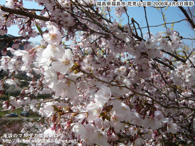 20080406hanamiyama_s3