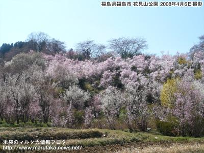 20080406hanamiyama_s4
